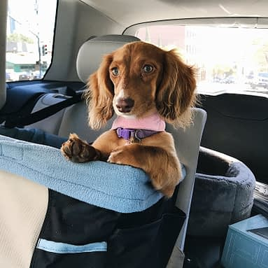 10 Items Every Dog Parent Needs