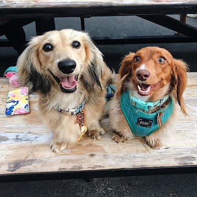Dog-Friendly Dining in San Diego