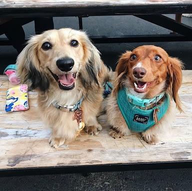 Dog-Friendly Dining in San Diego